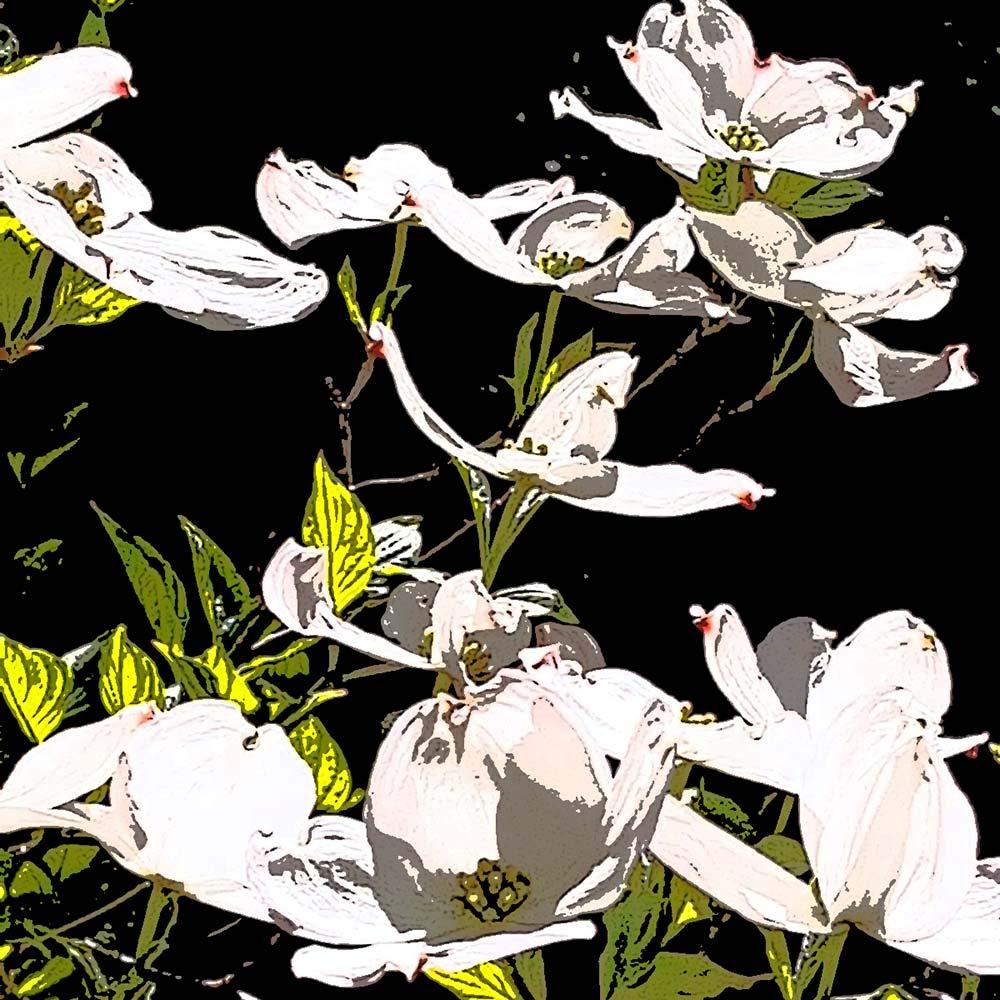 YourBestPicture Popart Blüten