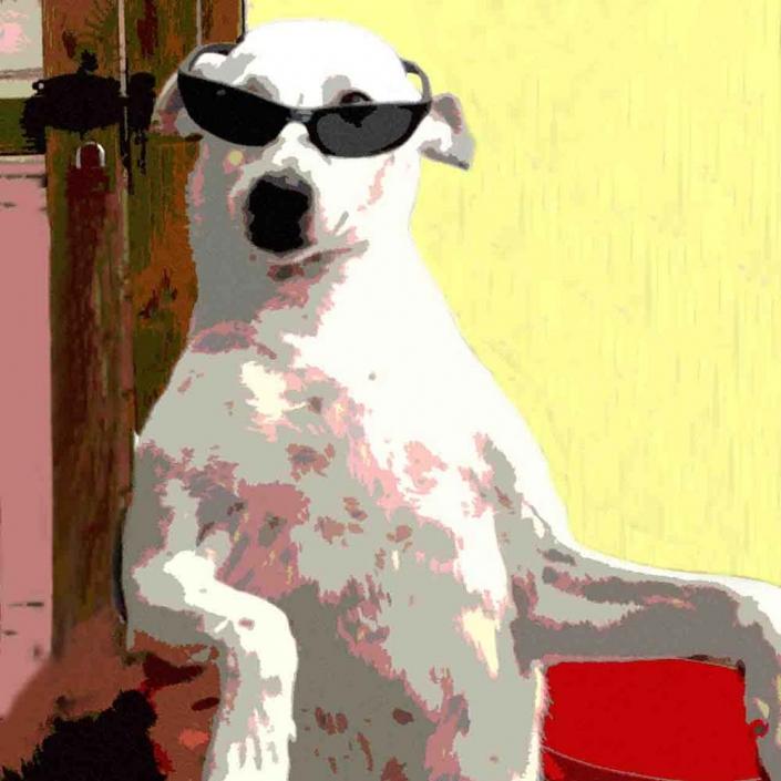 Popart-Foto Cooler Hund mit Sonnenbrille